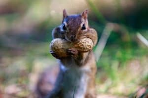 Forget Your Nuts. Protect Your Treats.
